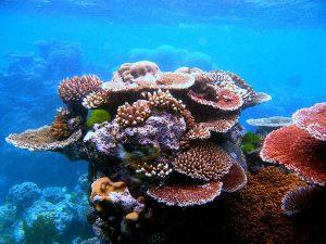 1200px-coral_outcrop_flynn_reef